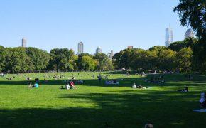 Riesige Liegewiese im Central Park