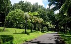 Botanischer Garten Bedugul