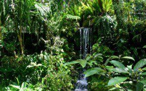 Im botanischen Garten in Bedugul...