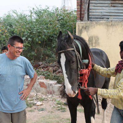 Indien Pferd