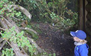 Erster Tierkontakt in Costa Rica