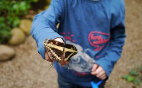 Im Butterflygarden Monteverde