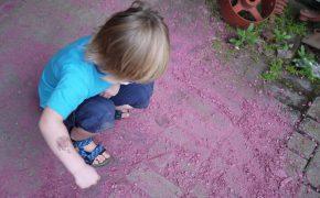 Nicht gefärbt, so sieht das Tropenholz Purple Heart aus