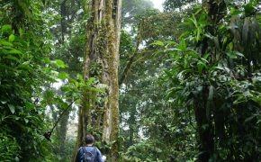 Wanderung im Cloud Forrest Reserve