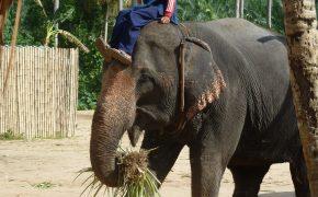 Elefantenprojekt