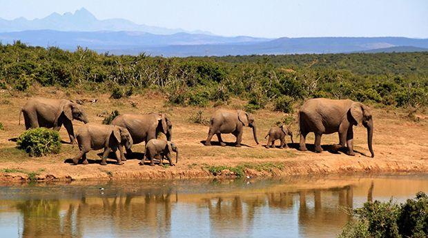 Elefanten in Südafrika