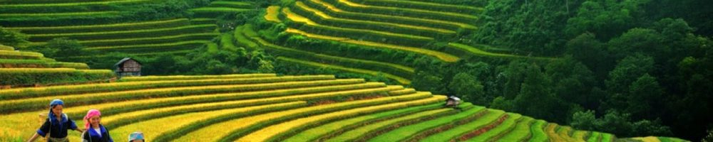 Reisterrassen in Sapa Vietnam